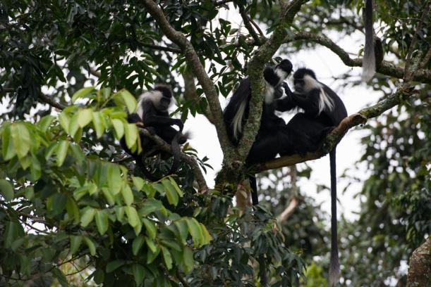 121224_Rwanda_02782