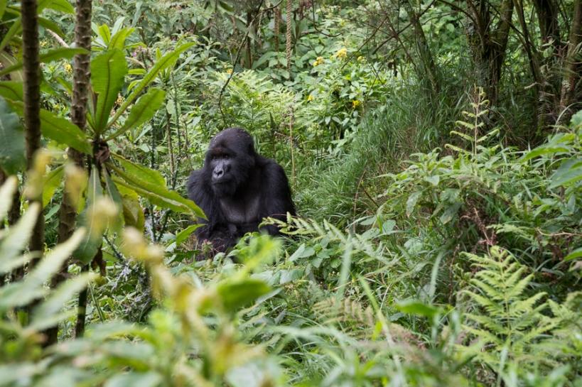 121227_Rwanda_04143